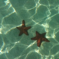 saving starfish