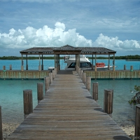 parrot cay