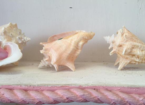 conch-farm-by-myseastory-4